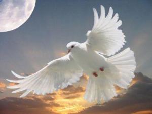 doveflying